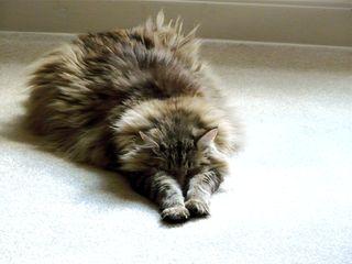 ToulouseSleeping