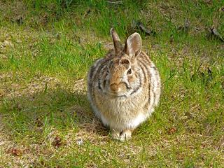 Bunny_handsome