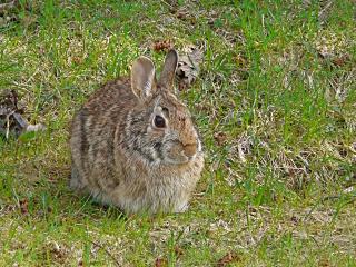 Bunny_pretty